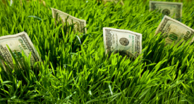 5 Mata Uang Perkasa dan Stabil dalam Trading Forex